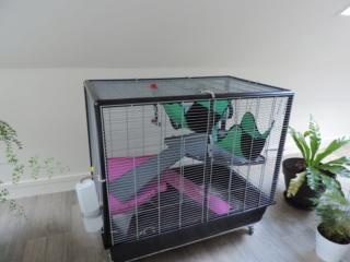 Mes cages à ratous  Dscn2814