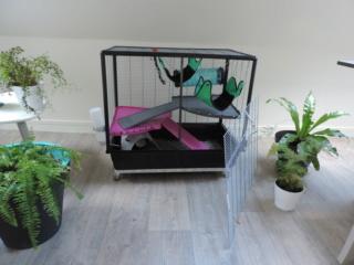 Mes cages à ratous  Dscn2815