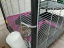 Quelle cage pour 2 rats  Img_2039