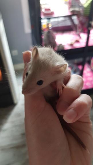 Bébé rat 20190410