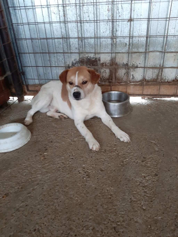 FlapJack - mâle - fourrière de Târgu Frumos - adopté via Andrea 10161310