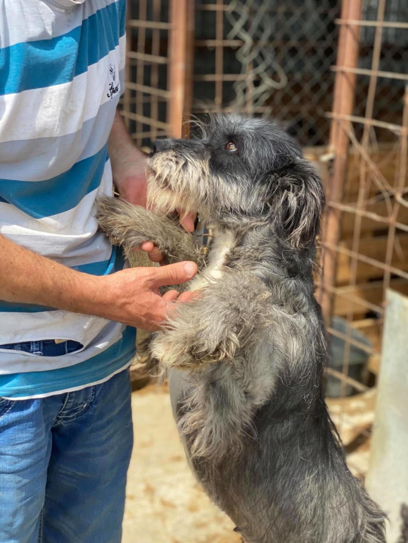 Leila- femelle- fourrière de Târgu Frumos - adopté via Andreea 10362910