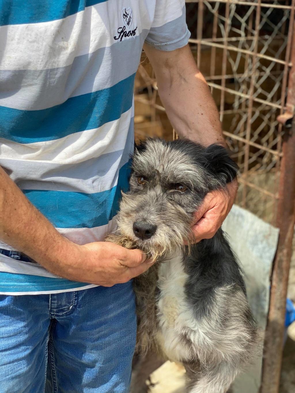 Leila- femelle- fourrière de Târgu Frumos - adopté via Andreea 10387411
