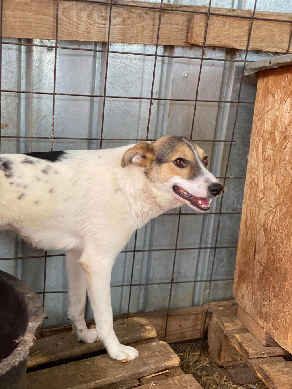 Nikita- femelle- fourrière de Târgu Frumos 10389010