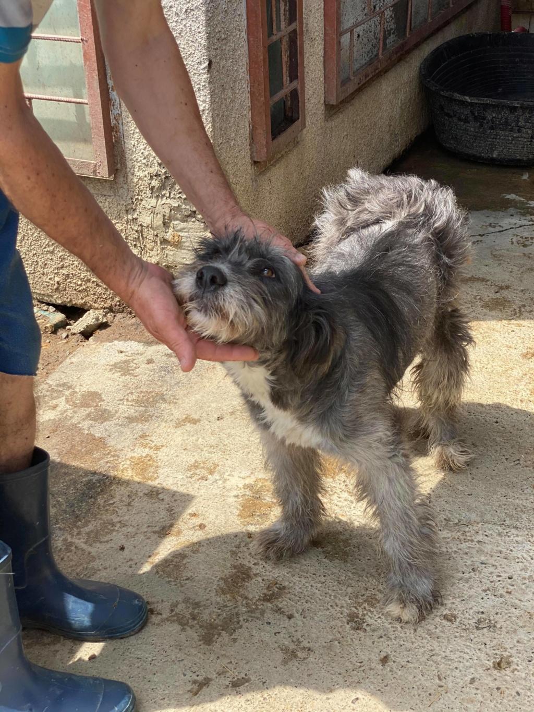 Leila- femelle- fourrière de Târgu Frumos - adopté via Andreea 10396210