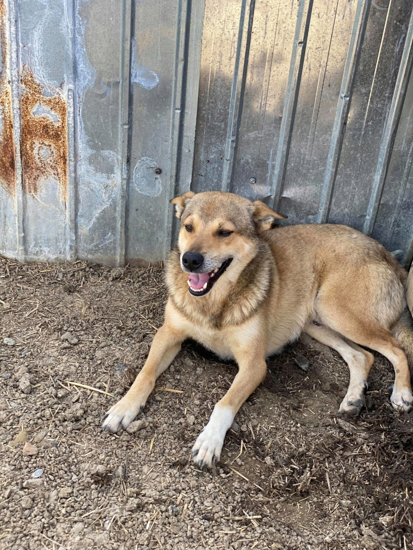 Puma- mâle- fourrière de Târgu Frumos adopté en Roumanie 10399410
