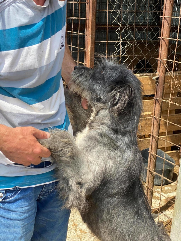 Leila- femelle- fourrière de Târgu Frumos - adopté via Andreea 10401810