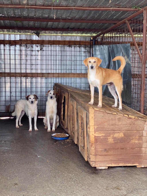 Appy- femelle- fourrière de Târgu Frumos - Réservée adoption (68) 10411512