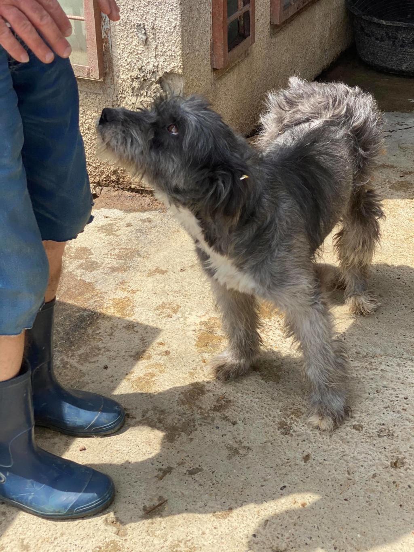Leila- femelle- fourrière de Târgu Frumos - adopté via Andreea 10418710