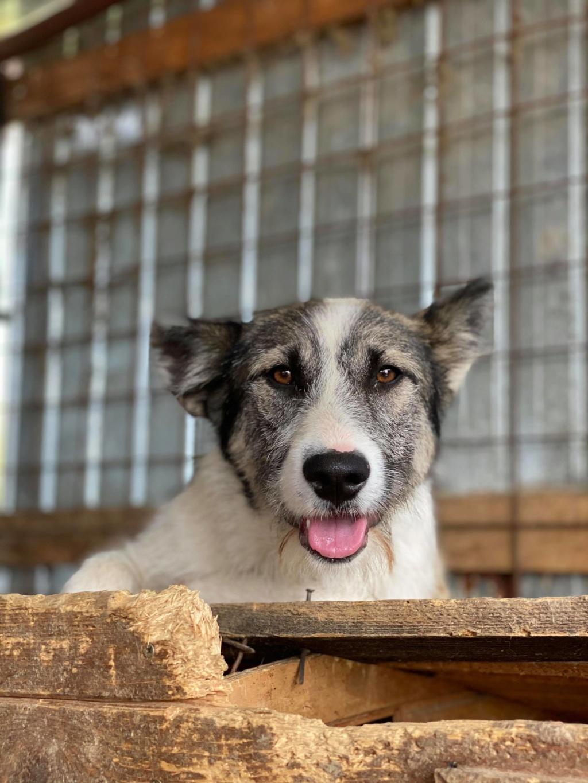 Belle- femelle- fourrière de Târgu Frumos - Réservée adoption (67) 10425810