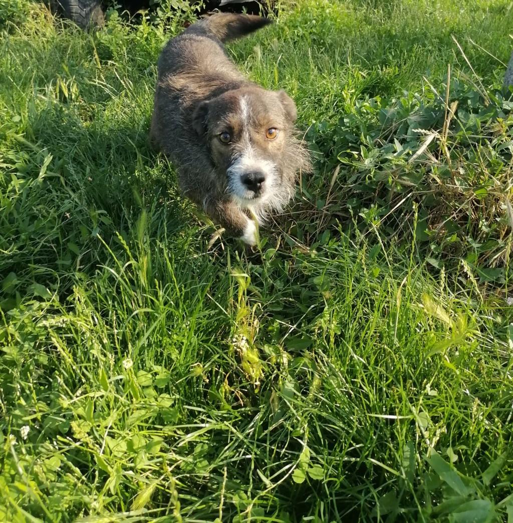 Scooby- mâle -refuge d'Arad 10638010