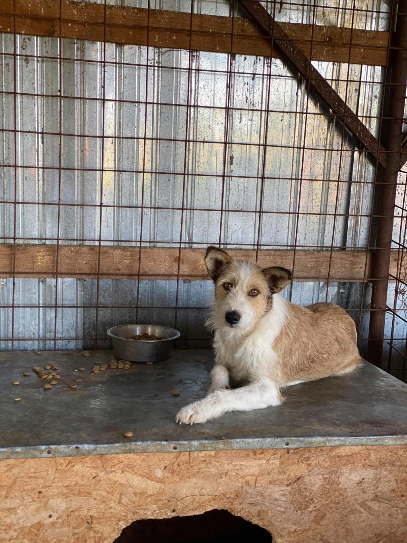 Alhambra- femelle- dans les rues de Târgu Frumos-reservée adoption ( 68 ) 10658810