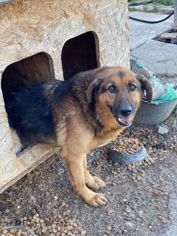 Lunky - mâle -  fourrière de Târgu Frumos - frais d'adoption réduits - Page 2 10673310