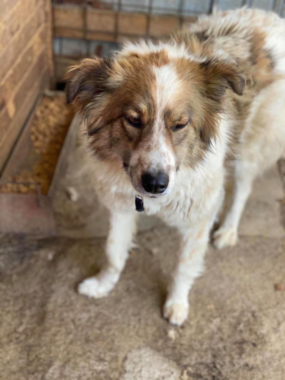Thasa- femelle- fourrière de Târgu Frumos - Frais d'adoption réduits 10744310