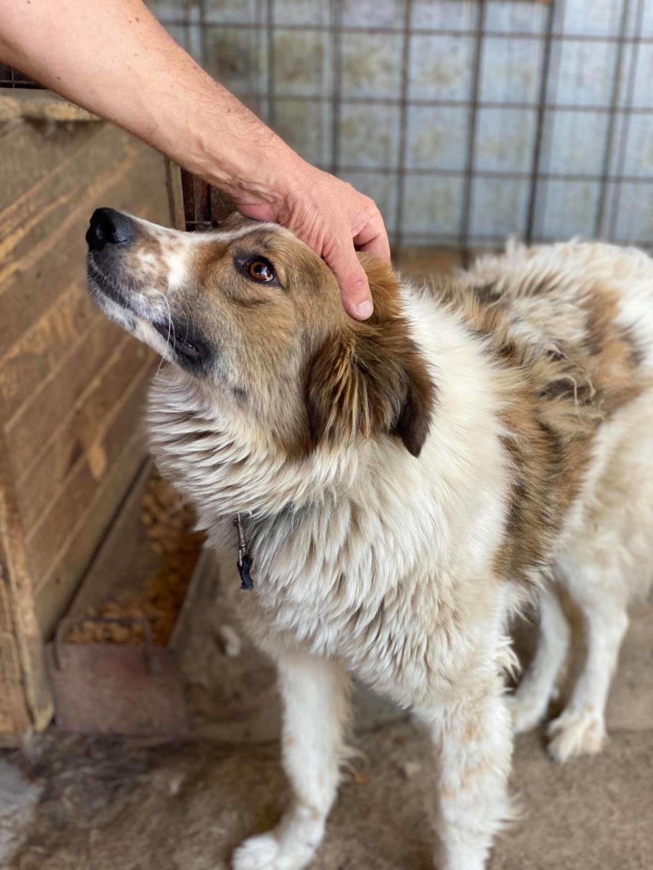 Thasa- femelle- fourrière de Târgu Frumos - Frais d'adoption réduits 10750410