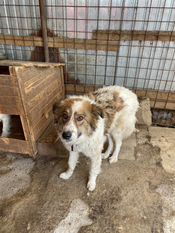 Thasa- femelle- fourrière de Târgu Frumos - Frais d'adoption réduits 10751510