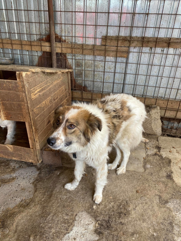 Thasa- femelle- fourrière de Târgu Frumos - Frais d'adoption réduits 10759410