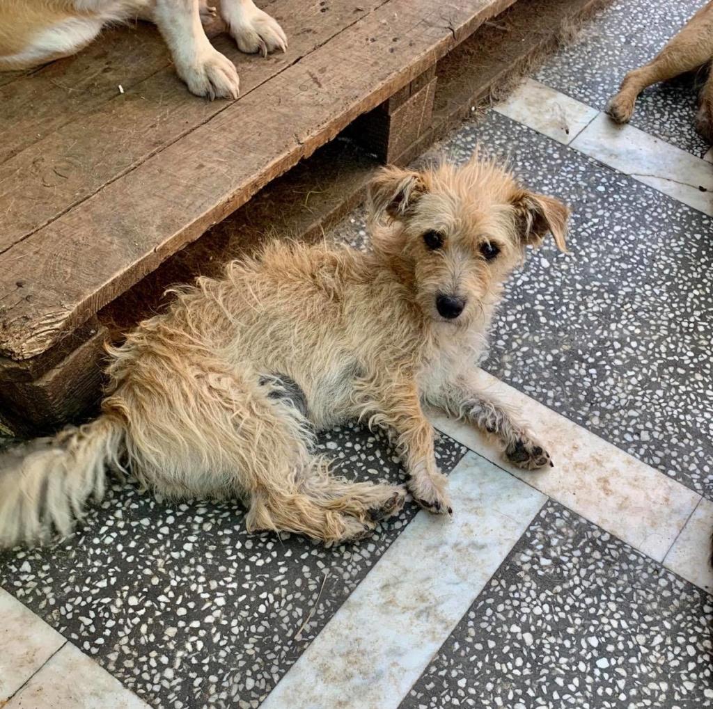 Marisa- femelle- refuge d'Arad - sera en famille d'accueil dans le 88 en Aout 10759710
