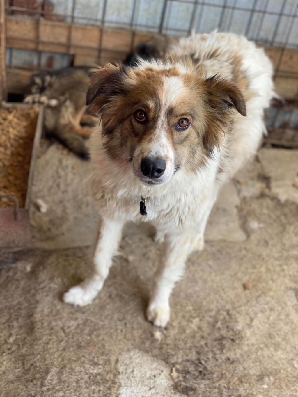 Thasa- femelle- fourrière de Târgu Frumos - Frais d'adoption réduits 10786810