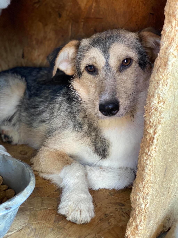 Ayrton- mâle-fourrière de Târgu Fumos - réservé adoption (68) 11583310