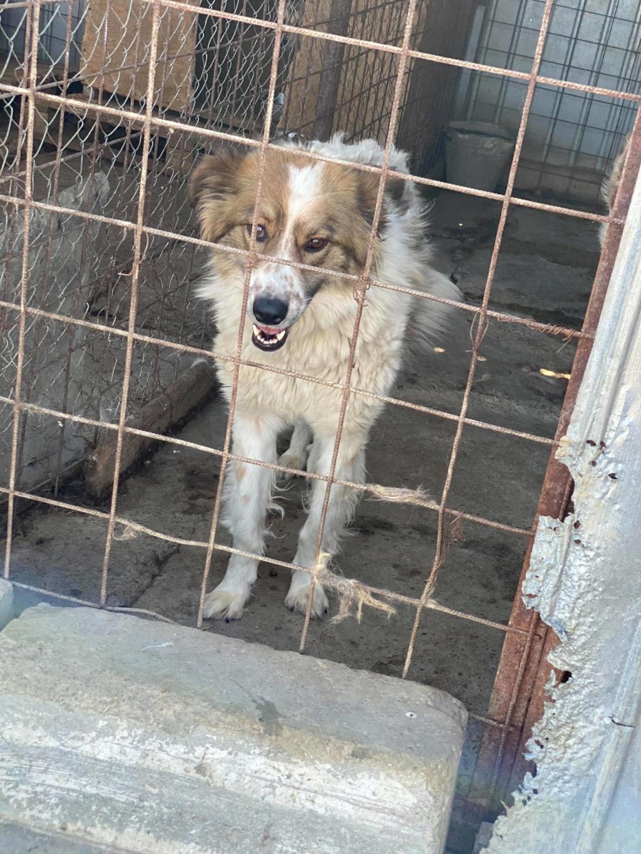 Thasa- femelle- fourrière de Târgu Frumos - Frais d'adoption réduits 11609810