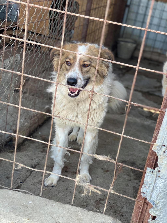 Thasa- femelle- fourrière de Târgu Frumos - Frais d'adoption réduits 11615410