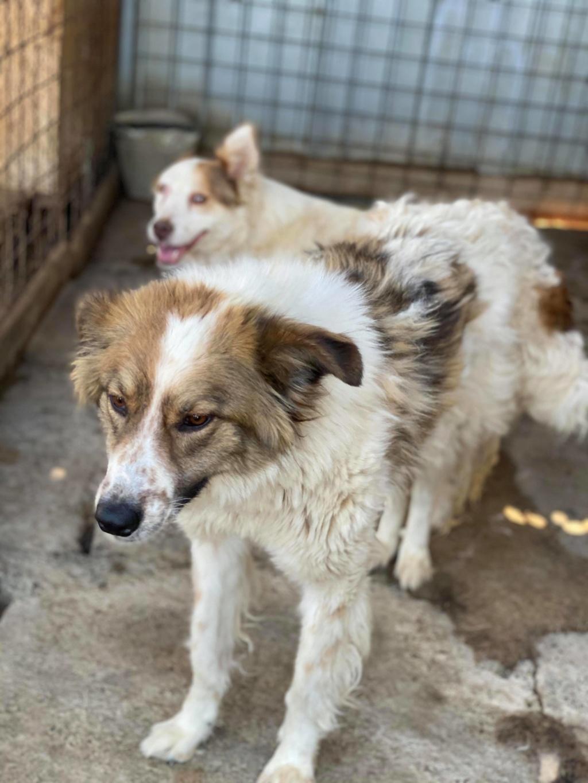 Thasa- femelle- fourrière de Târgu Frumos - Frais d'adoption réduits 11621510