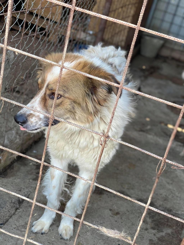 Thasa- femelle- fourrière de Târgu Frumos - Frais d'adoption réduits 11625510