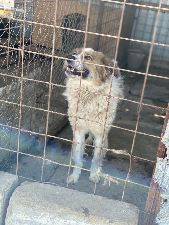 Thasa- femelle- fourrière de Târgu Frumos - Frais d'adoption réduits 11633510