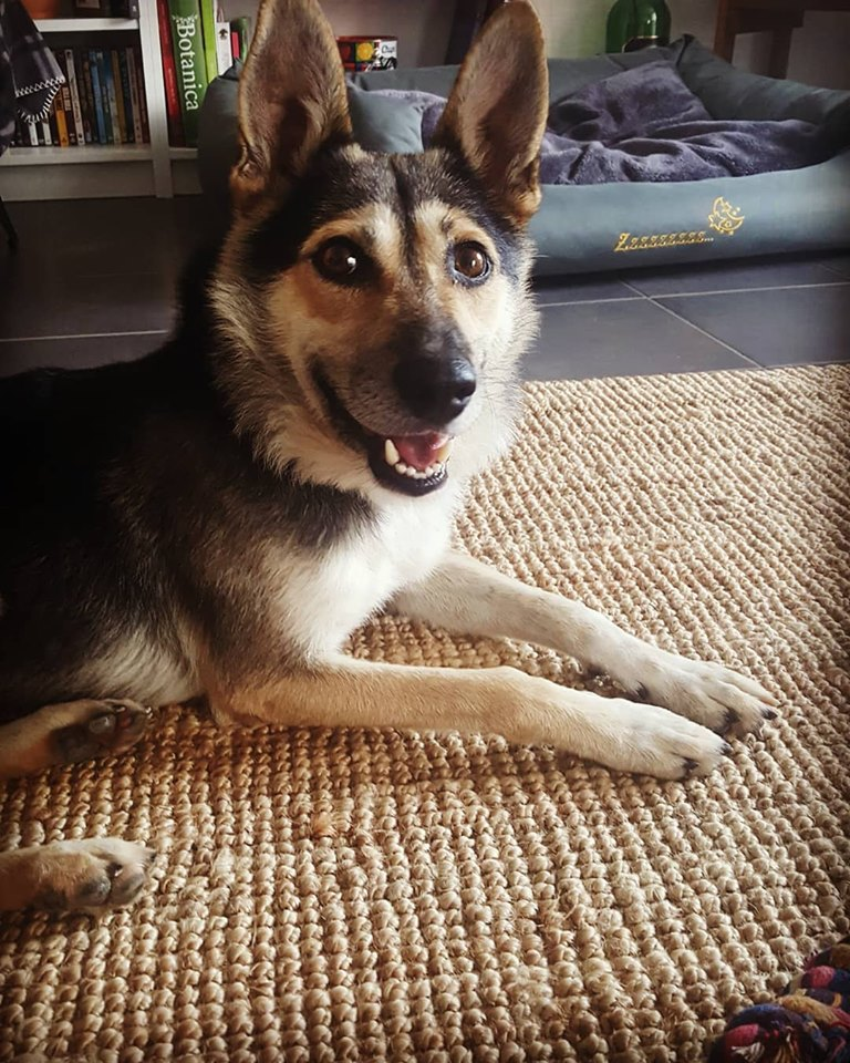 Kodack - mâle - fourrière de Târgu Frumos - réservé adoption 25 70869810