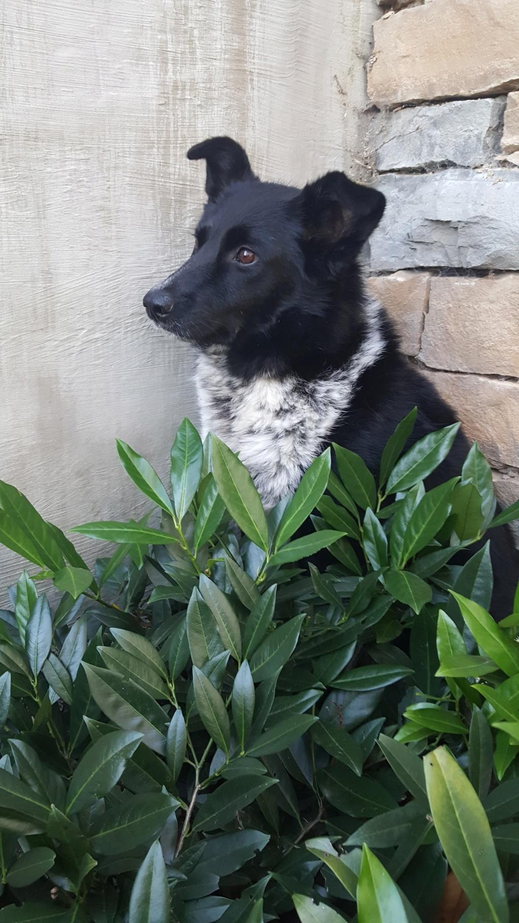Dakota - femelle - fourrière de Târgu Frumos - Réservée adoption (88) 72174010