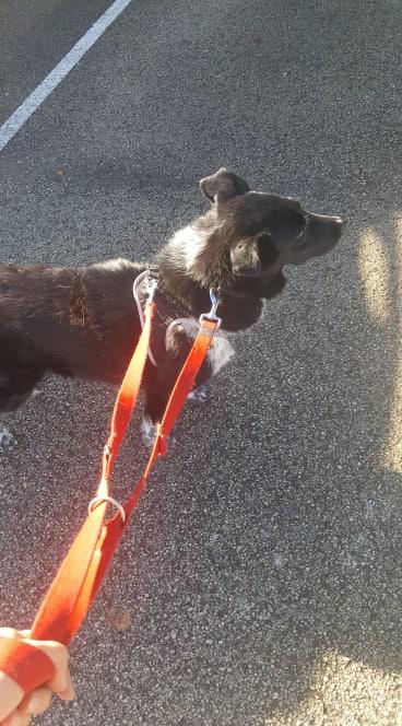 Dakota - femelle - fourrière de Târgu Frumos - Réservée adoption (88) 72597410
