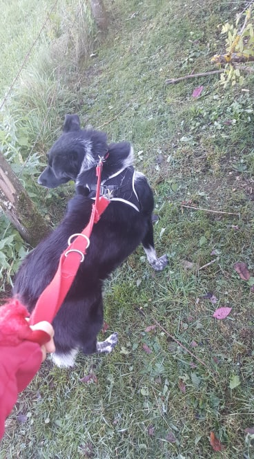 Dakota - femelle - fourrière de Târgu Frumos - Réservée adoption (88) 72802510