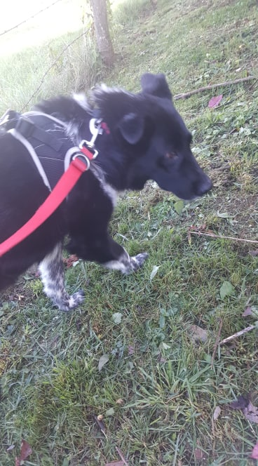 Dakota - femelle - fourrière de Târgu Frumos - Réservée adoption (88) 73031710