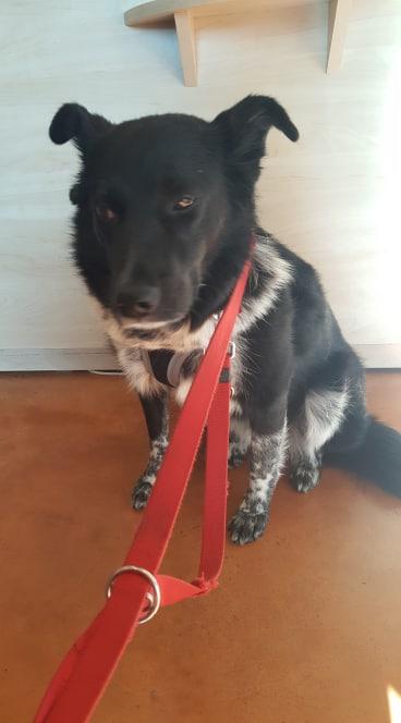 Dakota - femelle - fourrière de Târgu Frumos - Réservée adoption (88) 73078610