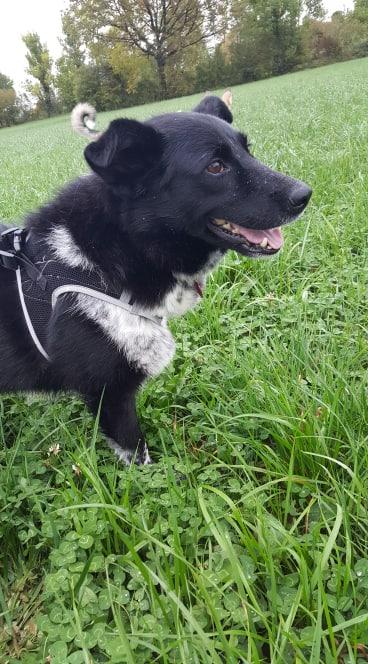 Dakota - femelle - fourrière de Târgu Frumos - Réservée adoption (88) 73146610