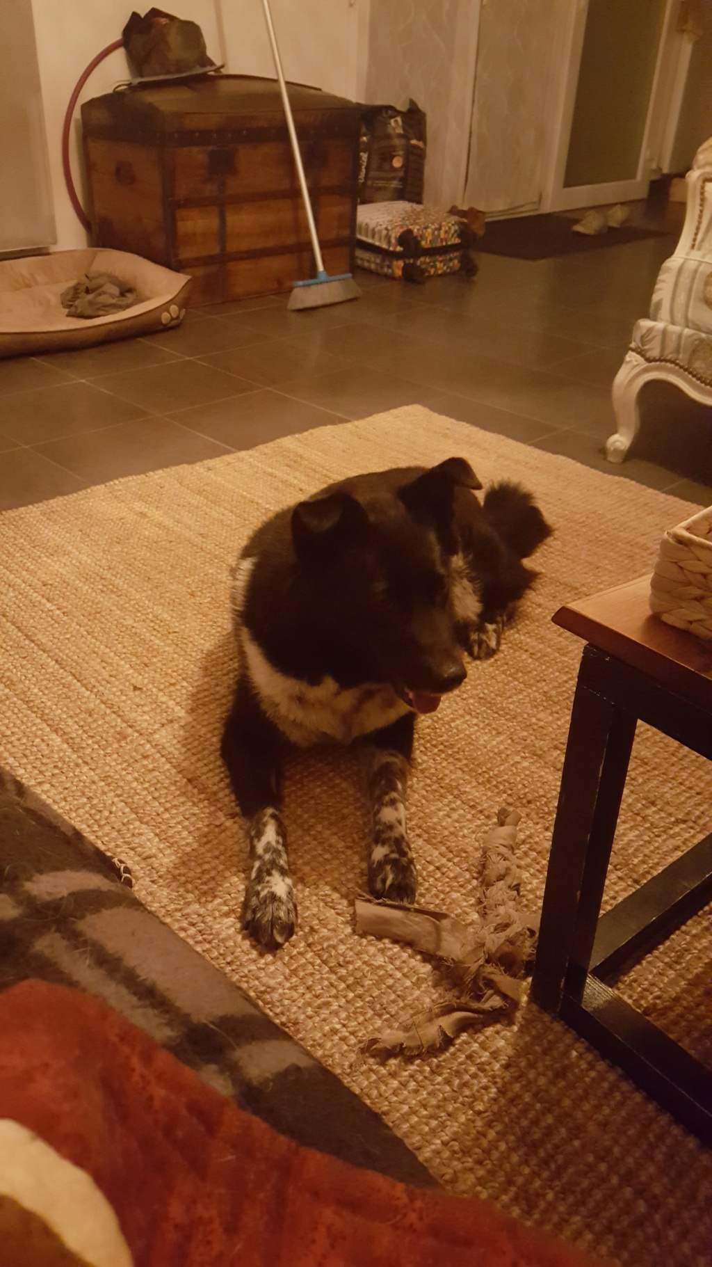 Dakota - femelle - fourrière de Târgu Frumos - Réservée adoption (88) 76762610