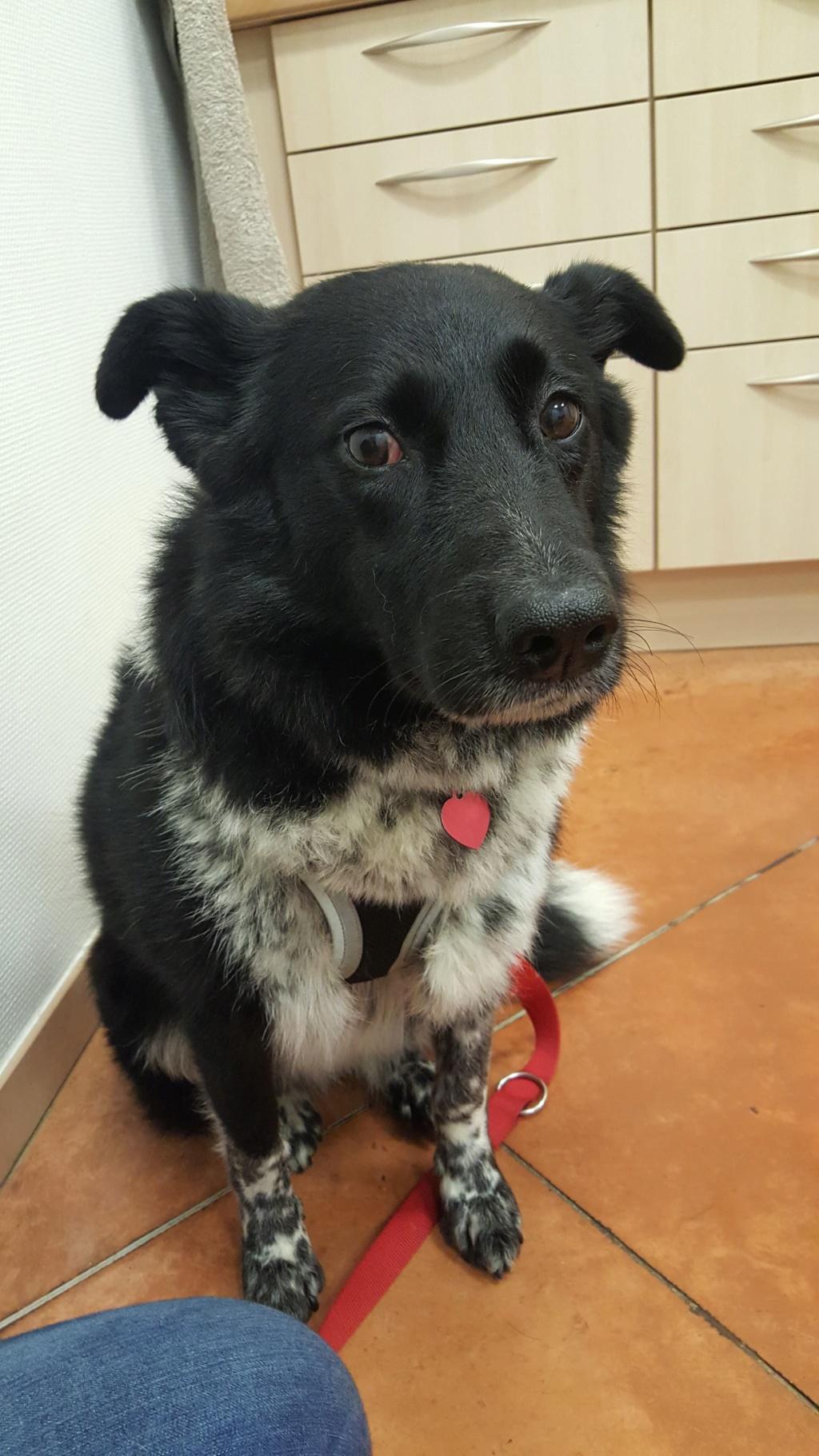 Dakota - femelle - fourrière de Târgu Frumos - Réservée adoption (88) 76958010