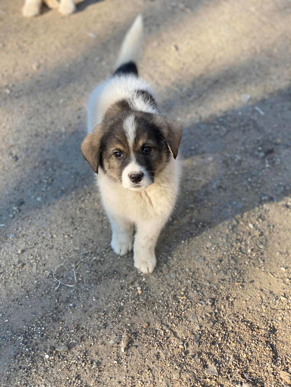 Mickélé- mâle- fourrière de Târgu Frumos - adopté via Andreea  91619110
