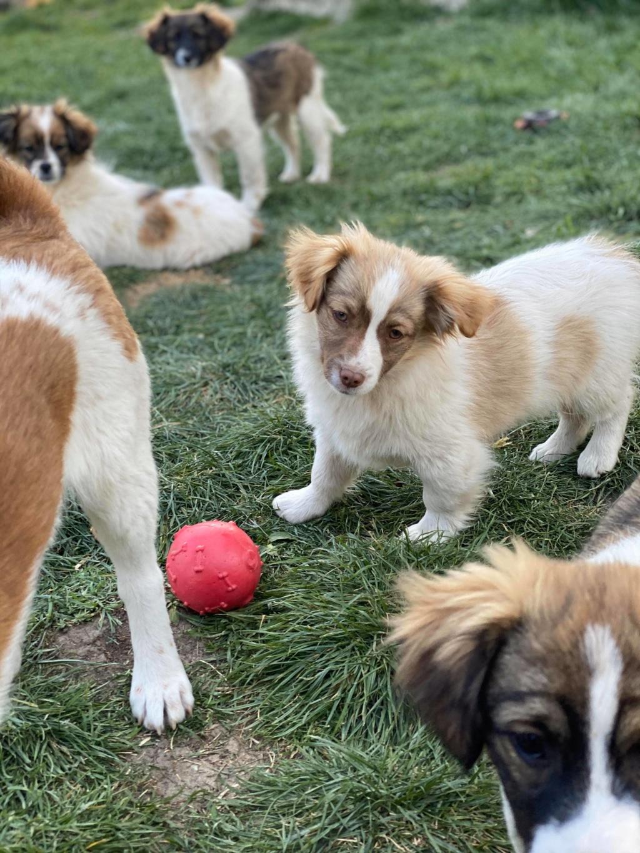 Rocky- mâle- fourrière de Târgu Frumos 91632610