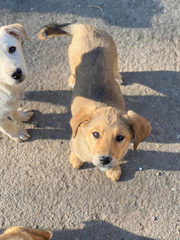 Cheese- femelle- fourrière de Târgu Frumos - Réservée adoption (67) 91647910