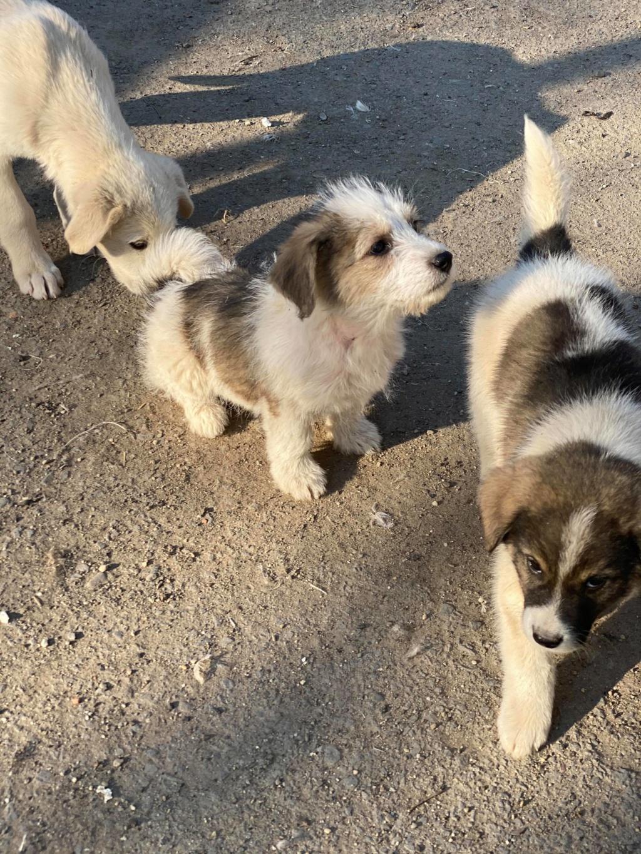 Mickélé- mâle- fourrière de Târgu Frumos - adopté via Andreea  91659610