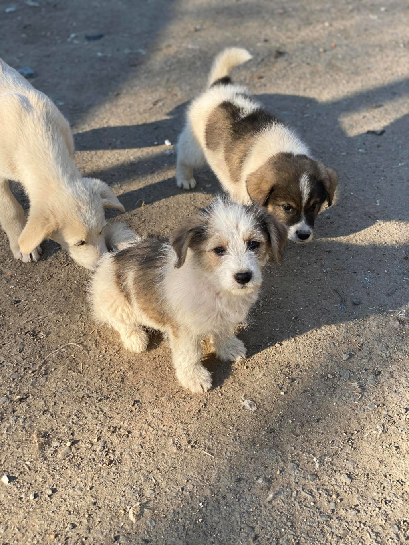 Skully -femelle- fourrière de Târgu Frumos - adoptée via Andreea 91684711