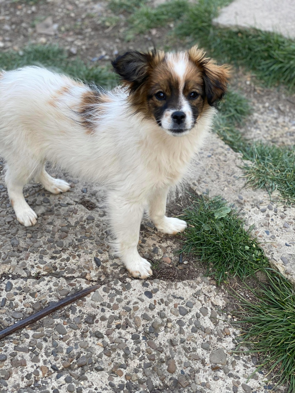 Pili- femelle- fourrière de Târgu Frumos - réservée adoption (68) 91862510