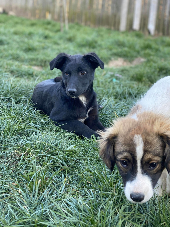 Mystic- femelle- fourrière de Târgu Frumos - Adoptée via Andrea 91928010