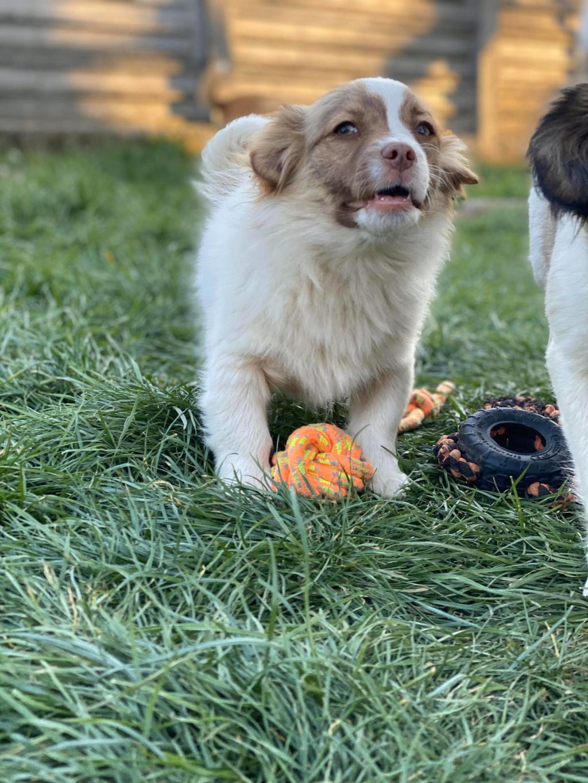 Rocky- mâle- fourrière de Târgu Frumos 91929610