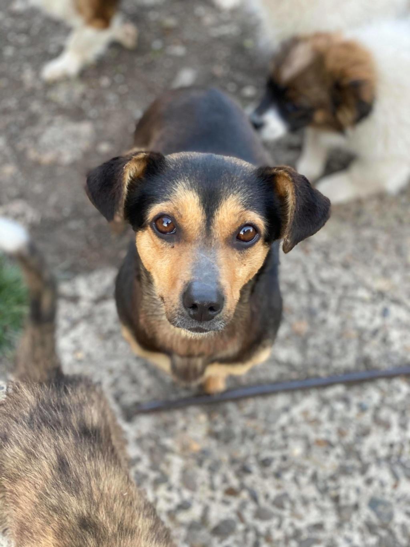 Nudel- femelle- fourrière de Târgu Frumos - adoptée via Andreea 91934210