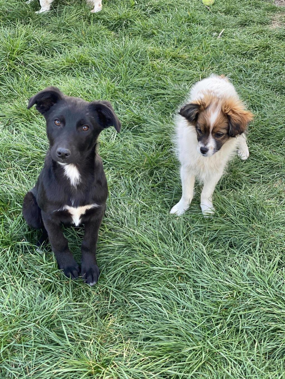Pili- femelle- fourrière de Târgu Frumos - réservée adoption (68) 92043411