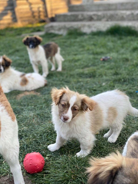 Rocky- mâle- fourrière de Târgu Frumos 92097310