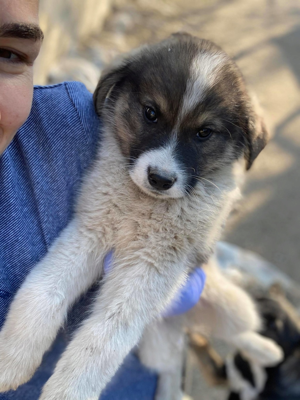 Mickélé- mâle- fourrière de Târgu Frumos - adopté via Andreea  92097311
